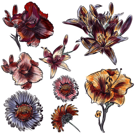 lily flowers collection: Collection of vector hand drawn flowers in engraved and watercolor style lily and daisy