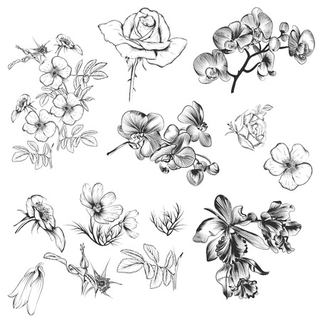 orchid: A collection of vector high detailed flowers for design in engraved style