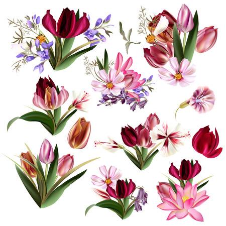 ベクトル現実的な花チューリップ コスモスと他の大きなコレクション
