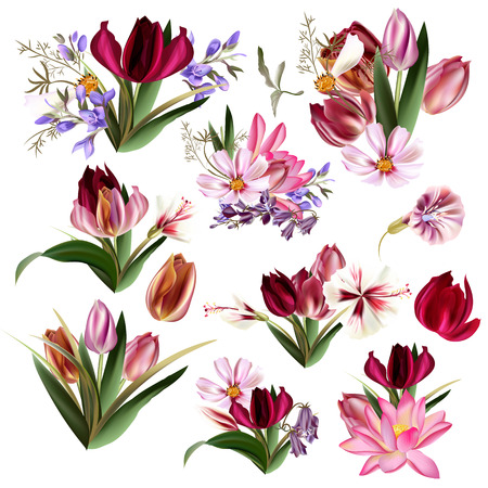 Big collection of vector realistic flowers tulips cosmos and other Иллюстрация