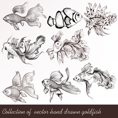 fish tail: A collection  of  goldfish in engraved vintage style