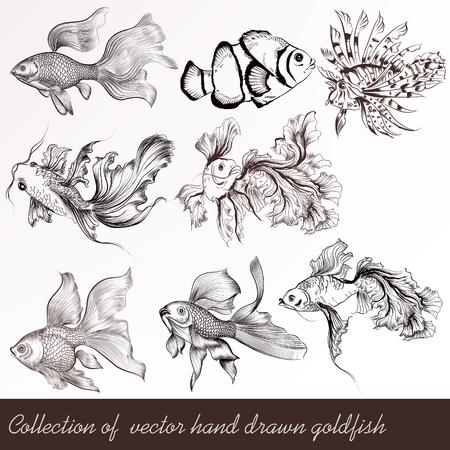 Une collection de poissons rouges dans le style vintage gravé