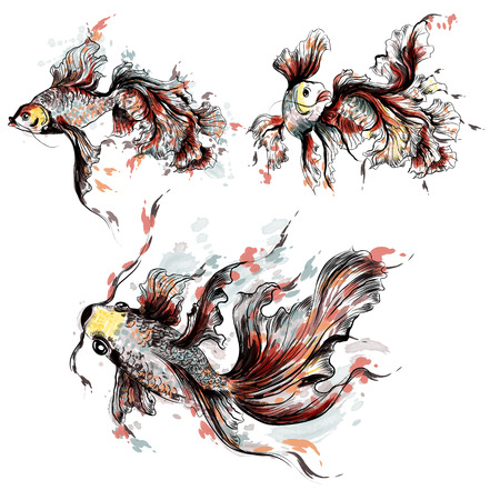 fishery: Collection of  goldfish in watercolor style painted by spots Illustration
