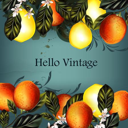 citrus tree: Grunge vintage styled background with lemons and oranges retro design