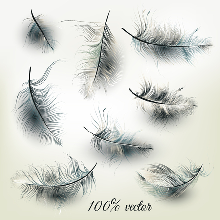 monochromic: Elegant collection of realistic vector feathers for fashion design