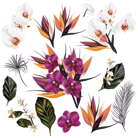 ベクトル熱帯のコレクション現実的なスタイルでの蘭のヤシの葉と他の花を植物します。
