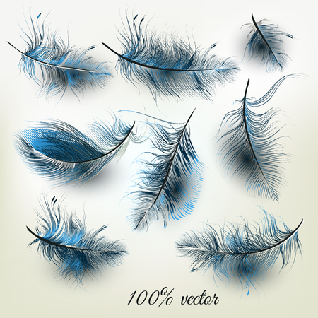 fashion design: Beautiful  collection of realistic vector blue feathers for fashion design Illustration