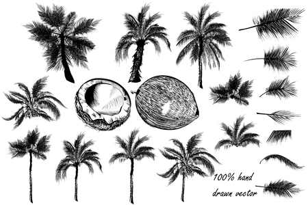 Big collection of  detailed palm trees and coconut for design