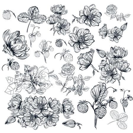 retro illustration: Mega collection or set of  flowers