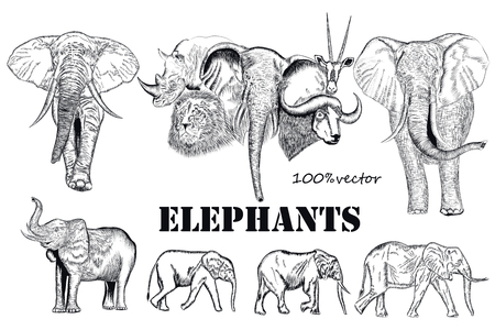 siluetas de elefantes: Colección de elefantes en el estilo de grabado para el diseño Vectores