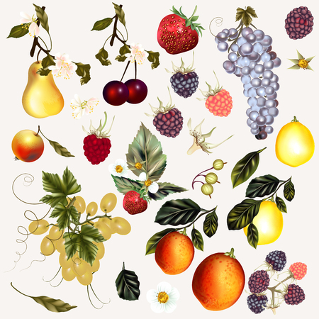 Mega collection of fruits and berries created in vintage style