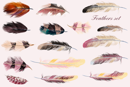 fashion collection: Beautiful collection of feathers in pink soft colors. Fashion illustration