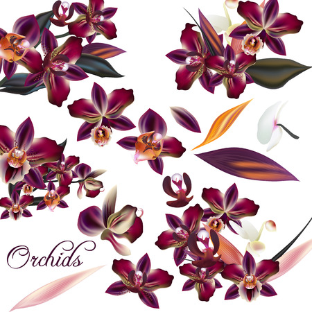 retro floral: A collection of realistic tropical orchid flowers for design