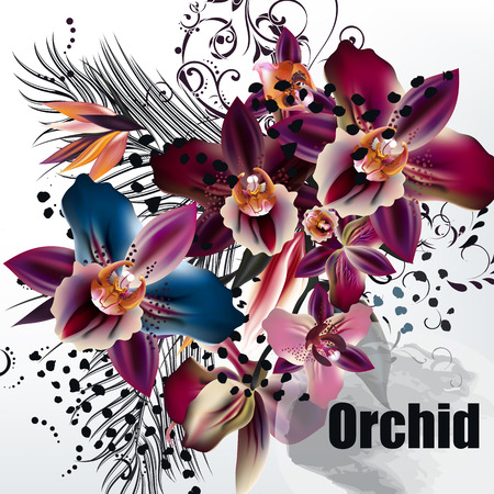orchid: Fashion background with tropical flowers,  plants orchids, leafs and ornament Illustration