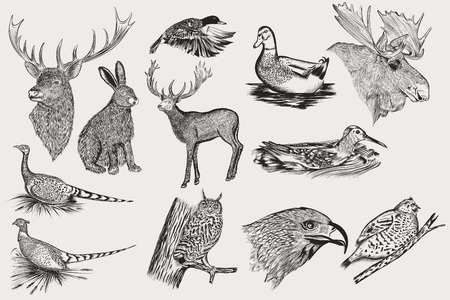 animals collection: Big collection of vector hand drawn animals for design Illustration