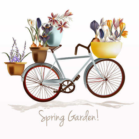 Illustration with blue bicycle and potters full of crocus flowers. Spring garden