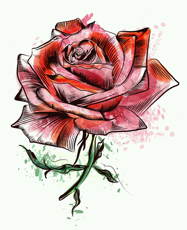 Beautiful  hand drawn watercolor rose vector illustration