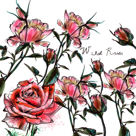 Beautiful watercolor roses in hand drawn style. Vector design
