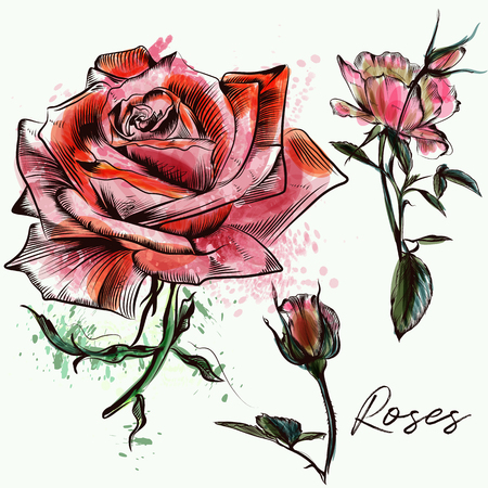 Beautiful collection from hand drawn watercolor roses
