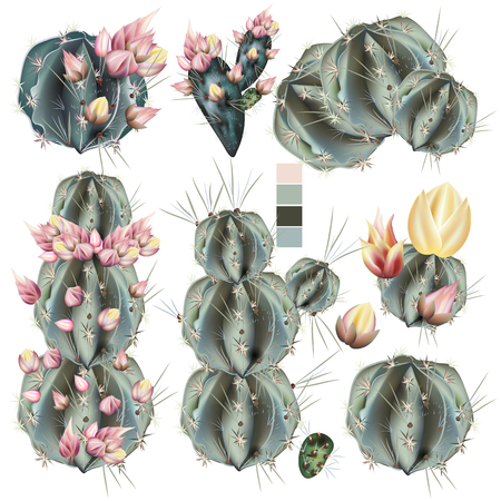 Collection of vector realistic cactus with flowers Vector Illustration