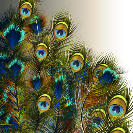 Fashion vector peacock feathers illustration in blue and green colors 矢量图像
