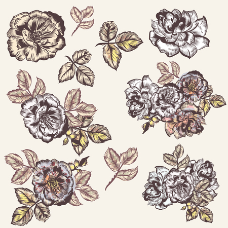 Collection of vector vintage had drawn roses