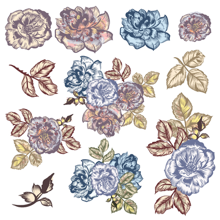 Collection of vector watercolor hand drawn vintage roses