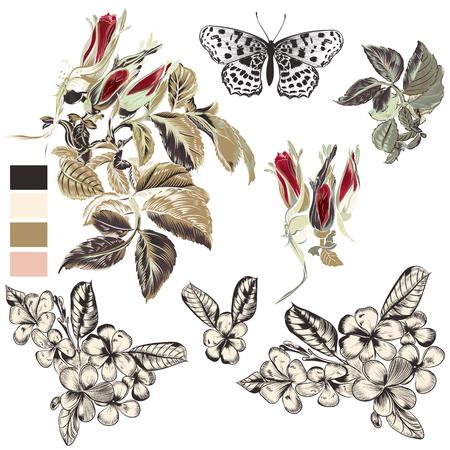 Set of vector hand drawn floral elements for design Illustration