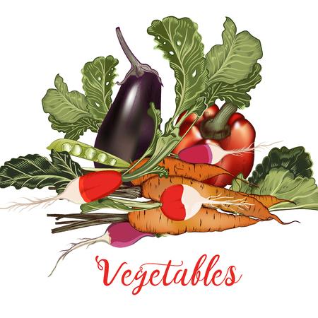 Illustration in vector vintage style with vegetables eggplant, radish, carrot Illustration