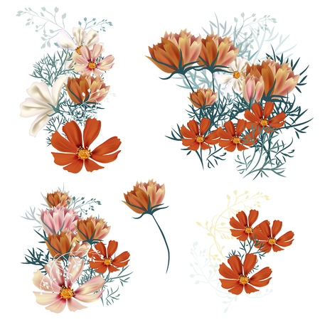 Set of vector realistic spring cosmos flowers for design