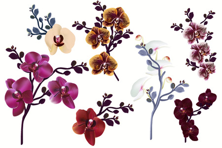 Huge collection of vector realistic orchid flowers for design