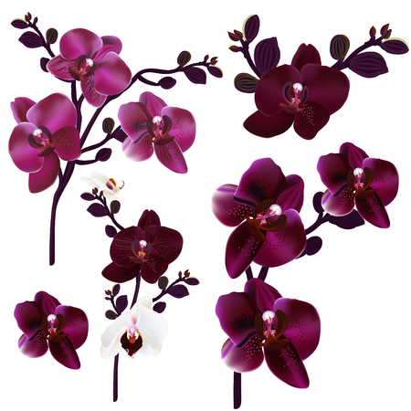 Collection of vector realistic orchids for design 向量圖像