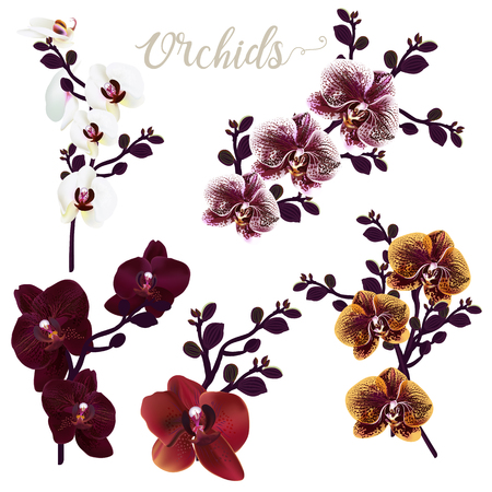 Collection of vector realistic orchid flowers, tropical illustration