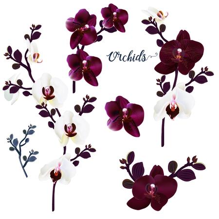 Set of vector orchids for design 向量圖像