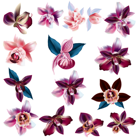 Collection of vector realistic orchid flowers