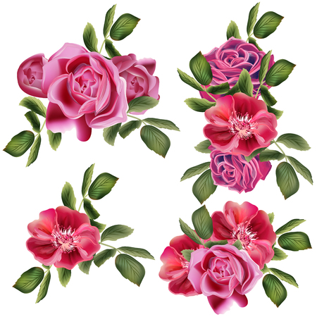 Collection of vector roses for design