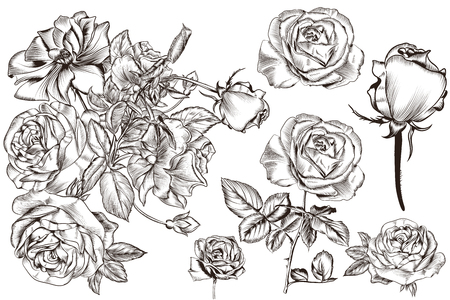 Collection of vector realistic vintage roses for design Ilustrace