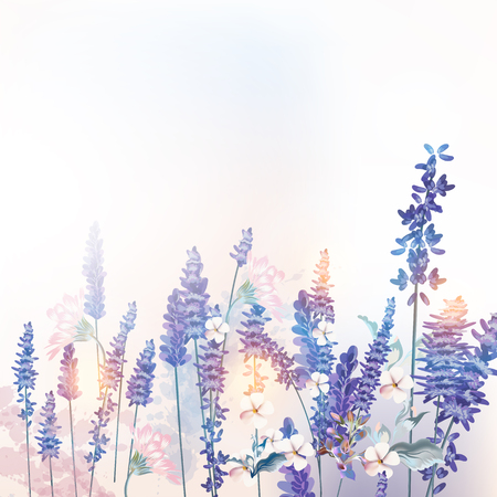 Floral vector spring illustration with field flowers lavender, morning light