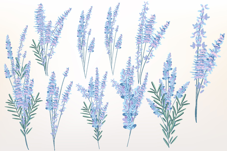 Big spring set of lavender flowers for design Banque d'images - 124418312