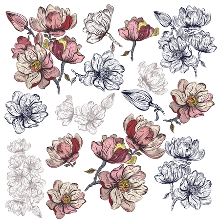 Big collection of vector magnolia flowers for design