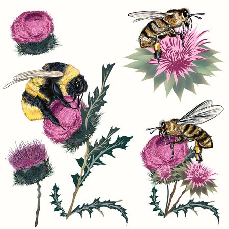 Collection of high detailed bee, bumblebee and thistle isolated on white