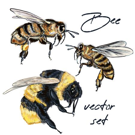 Collection of realistic bee, bumblebee in realistic watercolor hand drawn style.
