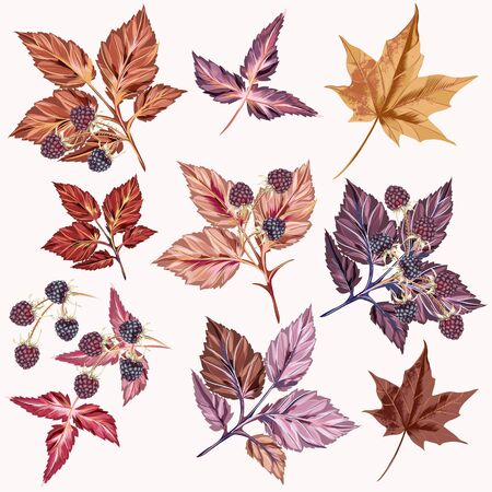Herfstset van vector gedetailleerde bladeren en bessen Vector Illustratie