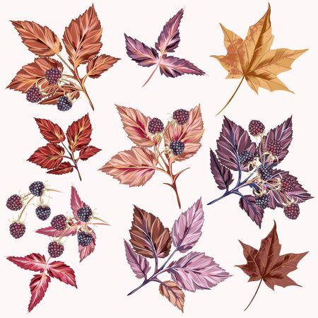 Otoño conjunto de vector detallado hojas y bayas Ilustración de vector