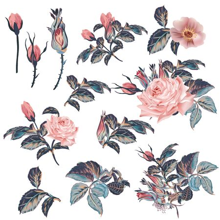 Collection of vector vintage roses in watercolor style