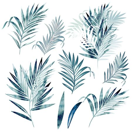 Big vector collection of palm leaves in watercolor style Çizim