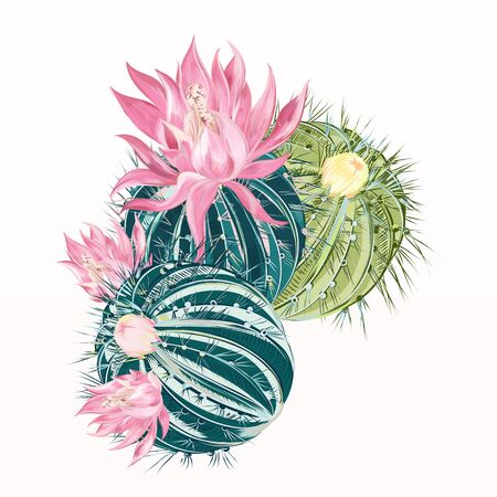 Cactus vector flower in realistic high detailed style Çizim