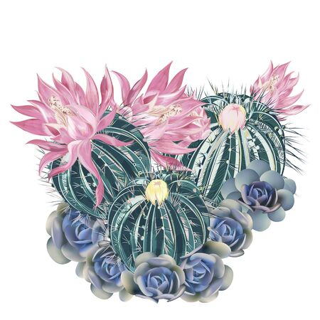 Illustration, T-shirt print with pink blooming cactus and blue succulents Çizim