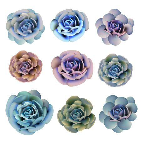 Collection of vector succulent plants in realistic style for design