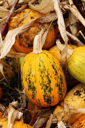Autumn outdoor pumpkin kitchen garden.
